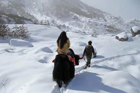 Ranchi to Shimla honeymoon tour packages
